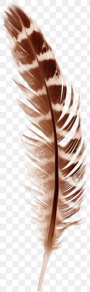Beautiful Brown Feathers - Bird Feather Paper Autumn PNG