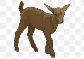 Goat - Goat Education Party Voluntary Association Cattle PNG