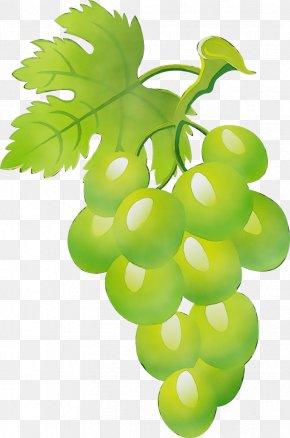 Flowering Plant Vitis - Grape Seedless Fruit Leaf Green Grape Leaves PNG