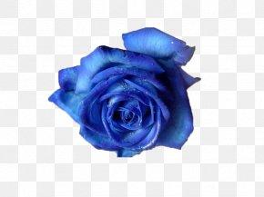 Romantic Aesthetic BLUELOVER - Blue Rose Flower Clip Art PNG