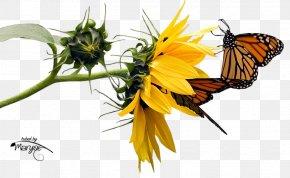 Blog - Pollinator Flower Butterfly .net .de PNG
