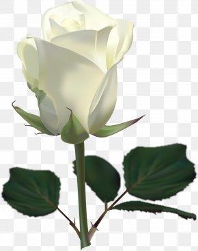 White Rose Image Flower White Rose Picture - Rose White Clip Art PNG