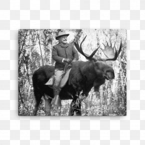 United States - The Rough Riders Moose United States Zazzle PNG