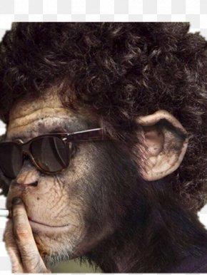 Glasses Smoking Orangutan - Chimpanzee Gorilla Orangutan Monkey Wallpaper PNG