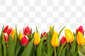Tulip Flowers - Paper Tulip Flower Stock.xchng Stock Photography PNG