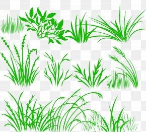 -painted Grass - Herbaceous Plant Drawing Desktop Wallpaper PNG