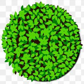 Tree Top View - Tree Bonsai Shrub PNG