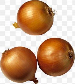 Onion Image - Potato Onion Shallot Vegetable PNG