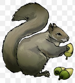 Squirrel - Eastern Gray Squirrel Chipmunk Rodent Clip Art PNG