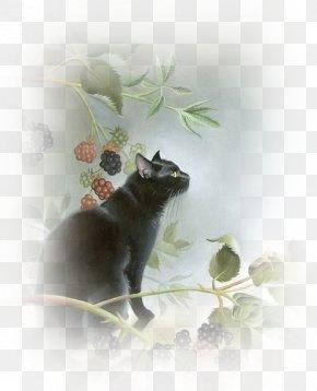 Black Cat - Black Cat Kitten Le Chat Noir Pet PNG