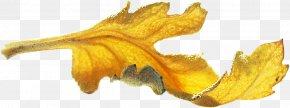Leaf - Gold Leaf Gold Leaf PNG