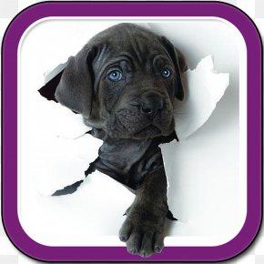 Cane - Puppy Komondor Pug Bull Terrier Pet PNG