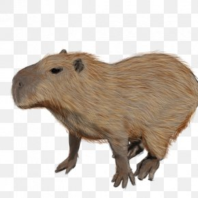 Zoo Background - Capybara Rodent Guinea Pig Beaver Animal PNG