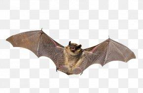 Bat - Little Brown Bat Mammal Animal Nocturnality PNG