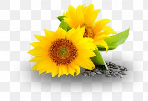 Sunflower Oil - Sunburn Cleanser Skin Rash First Aid Supplies Soap PNG