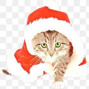Kitten Norwegian Forest Cat - Santa Claus PNG