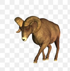 Sheep - Barbary Sheep Cattle PNG