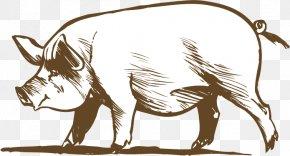 Vector Pig - Cattle Pig Chicken Livestock PNG