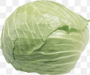 Cabbage - Napa Cabbage Chinese Cabbage Vegetable Food PNG