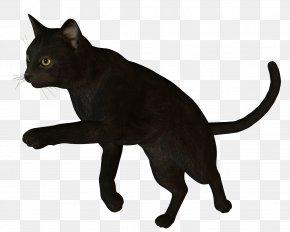 Black Cat - Bombay Cat Korat Burmese Cat Havana Brown Black Cat PNG