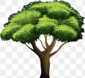Tree Vector - Clip Art Vector Graphics Illustration Royalty-free Stock Photography PNG