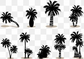 Coconut Palm Tree Silhouette Vector - Arecaceae Silhouette PNG