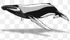 Dolphin - Dolphin Killer Whale Automotive Design Sketch PNG