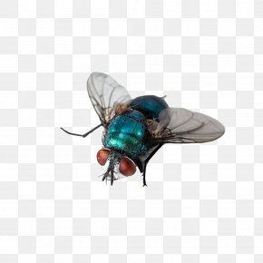 Fly Insects - Insect Fly Computer File PNG