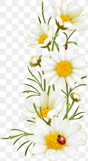 Hand Painted White Flowers - Poppy Flower Chamomile Illustration PNG