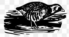 Water Bird - Bird Clip Art PNG