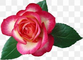 Large Rose Clipart Picture - Rose Flower Red Leaf Clip Art PNG