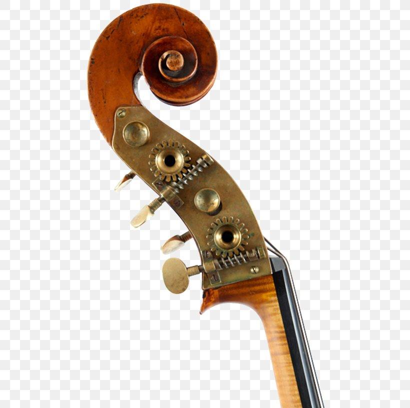 Violone Cello Violin Double Bass Viola Png 500x816px