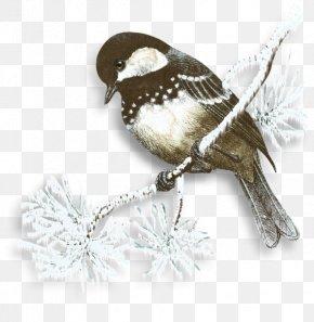 Snowy Birds In The Snow - Snow Flurry Winter Bird Clip Art PNG
