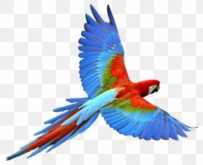 Flying Parrot Images, Free Download - Parrot Bird PNG
