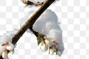Snow Pressure Meizhi - Snow Winter Twig PNG