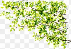 Green Plant Numbers - Tree Green Branch Sunlight PNG