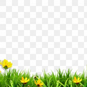 Meadow - Clip Art PNG