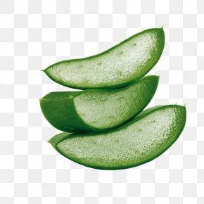 Aloe Plant Water - Aloe Vera Skin Drinking Herb Health PNG