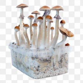 Mushroom - Edible Mushroom Magic Mushrooms Psilocybin Mushroom PNG