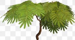 Tree - Tree Albizia Julibrissin Sensitive Plant Acacia Arecaceae PNG