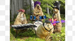 Birthday - Punxsutawney Phil Groundhog Day Birthday PNG