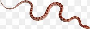Snake - Snake Boa Constrictor Clip Art PNG