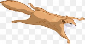 Squirrel - Prairie Dog Flying Squirrel Eastern Gray Squirrel Clip Art PNG