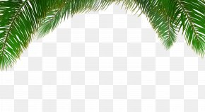 Vector Palm Tree Background - Arecaceae Tree Euclidean Vector Leaf PNG