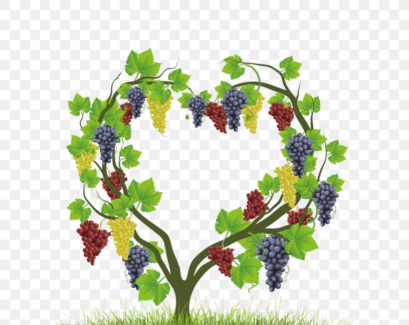 Common Grape Vine Heart Auglis, PNG, 600x651px, Grape, Auglis, Centerblog, Common Grape Vine, Flower Download Free