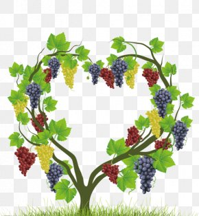 Heart-shaped Vines - Common Grape Vine Heart Auglis PNG