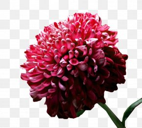 A Picture Of Ink Chrysanthemum - High-definition Television Flower Display Resolution Widescreen Wallpaper PNG