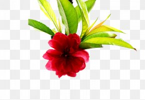 Clear Bouquet - Poster Spring PNG