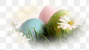 Floral Eggs - Easter Bunny Wish Greeting & Note Cards Resurrection Of Jesus PNG