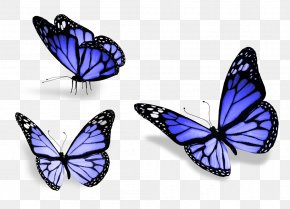 Three Butterfly - Butterfly Stock Photography Royalty-free Wallpaper PNG